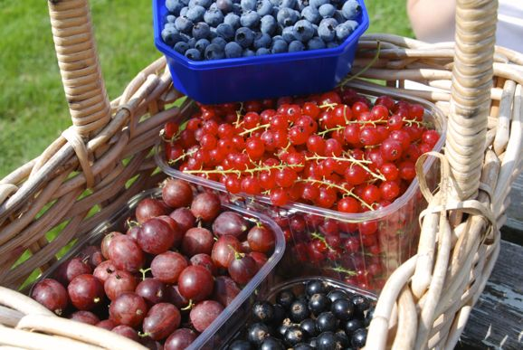 Red & Blackcurrant Jam